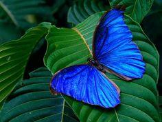 ¡Qué azul es esta mariposa! Vamos a pensar en palabras que se refieren a cosas que son de color azul. Por ejemplo: lapislázuli.