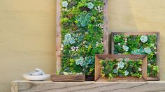 In a frame | On a driveway, atop a doghouse, up a wall—here's how to garden in small and unusual spaces