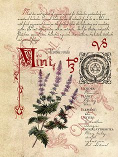 BOS ~ Mint herb page