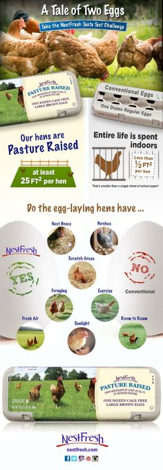Egg Talk: A Guide to Purchasing Healthy Eggs for Everyone