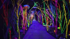 The Meow Wolf Experi