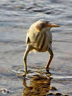 Nothing worse than a guy in skinny jeans. 😂 Funny Pictures Of The Day - 34 Pics Pretty Birds, Beautiful Birds, Animals Beautiful, Animals And Pets, Funny Animals, Cute Animals, Animal Memes, Funny Cute, Hilarious