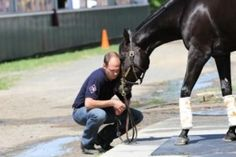 Breeders' Cup Presents Connections: Hard Work, Humility Take Tom Morley To New Heights - Horse Racing News Racing News, Horse Racing, Trainers, Toms, Horses, Athletes, Animals, English, Caregiver