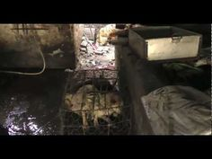 The cruel dog meat and fur trade in China - Animal Equality investigation   please sign petition