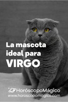 ¡VIRGO, esta es tu mascota ideal! porque no todos tenemos en mismo carácter y no a todos nos gustan las mismas mascotas ¡Haz clic en la imagen para consultar tu predicción de HOY gratis! #virgo #mascotaperfecta #mascotas #prediccionvirgo