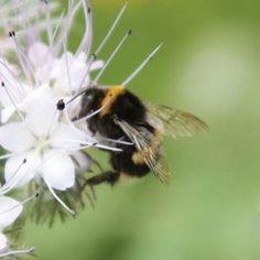 Beepol Bumblebee Hive http://www.harrodhorticultural.com/beepol-bumblebee-hive-pid8450.html