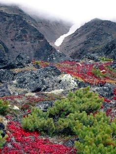 Colores of Kamchatka, Siberia, Russia.