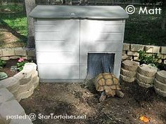 rubbermaid shed for african sulcata tortoise - Yahoo Image Search Results