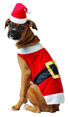 Rasta Imposta Santa Dog Costume    You can find more details by visiting  the image 1e8de5f90
