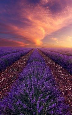 Levander fields
