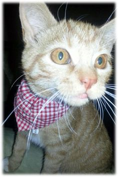 Fashionable And Fun Cat Bandanas