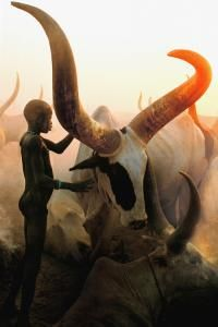 Dinka Boy with Long Horned Bull in South Sudan by Carol Beckwith and Angela Fisher.