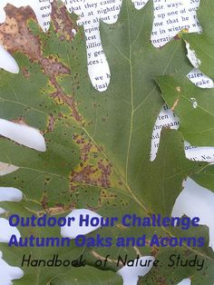 Outdoor Hour Challenge – Oaks and Acorns Nature Study, Acorn, Challenges, Trees, Autumn, Outdoor, Outdoors, Fall, Tassel