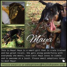 Maya is ready for her home! Crate Training, Smart Girls, Foster Parenting, Cuddling, The Fosters, Maya, Fails, Adoption, Club