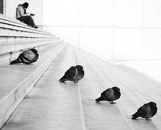 four pigeons chilling on the stairs