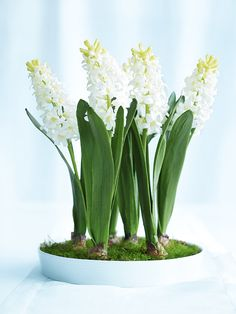 For a pretty centrepiece that blooms all spring and doesn't look out of place on the dining table, plant spring bulbs in a white ceramic baking dish.