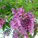 "Astrid from Rio Rancho offers ""Les couleurs du printemps"""