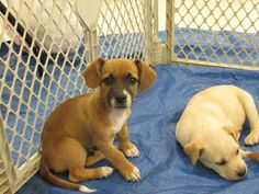 05/25/15-PLEASE SHARE TO RESCUES..WE NEED SERIOUS HELP HERE IN ROCKY MOUNT NC!!!!!!!!!!!!!!!! JUST PUPPIES **FOSTER**ADOPT**RESCUE**PLEDGE**SHARE** Thank-You!! https://www.facebook.com/FriendsOfRockyMountAnimals/photos/a.494033433980179.131267.493907430659446/970460346337483/?type=1&theater