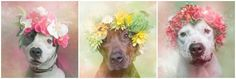 Dogs With Flower Crowns Promote Pit Bull Adoption