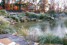 A Canberra garden pond in winter - Modern Landscaping Around Trees, Pond Landscaping, Tropical Landscaping, Landscaping With Rocks, Natural Swimming Ponds, Natural Pond, Swimming Pools, Australian Native Garden, Australian Plants