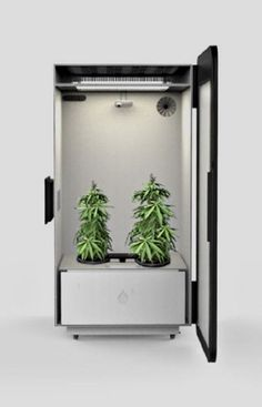 """3) The """"Plug N' Plant"""" Box that grows weed"""
