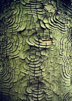 Texture and pattern: every piece of tree bark is an expression of the tree. Organic Forms, Natural Forms, Natural Texture, Patterns In Nature, Textures Patterns, Color Patterns, Print Patterns, Art Grunge, Foto Macro