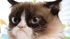 Grumpy Cat celebrates 2 years of being in a bad mood
