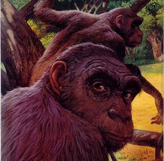 Sahelanthropus 7 million years ago
