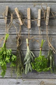 Italian parsley, thyme, sage, curly parsley, rosemary
