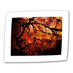 Japanese Tree by John Black Photographic Print on Canvas