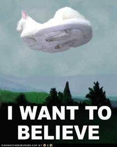 Hovercat. I'm laughing at this awkwardly but okay HAHAHAHA
