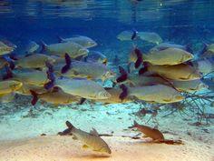 Bonito - Peixes 09