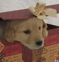 To whomever becomes my future hubby…PLEASE PLEASEEE just gimme a puppy in a box for xmas or my bday….& you will make me the happiest girl in the world!