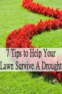 7 Tips to help your lawn survive a drought