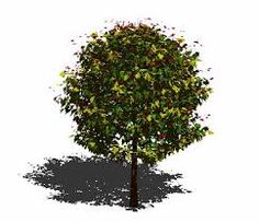 Trees 3d - Google Search