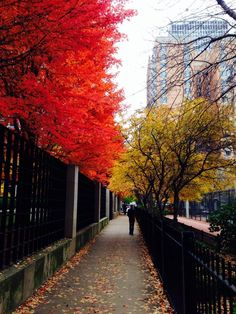 Our concierge, Romeo, shared this beautiful photo of the leaves changing colors in downtown Chicago.  Fall is definitely here and we love it