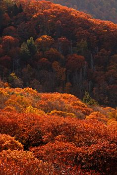 Autumn bloom, Shenandoah National Park, Virginia