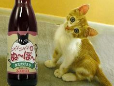 """Vino para gatos: Japón vende bebida sin alcohol """"Miau Miau"""""""