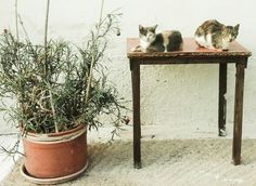"""Greek cats resting"""