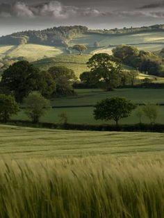 Rolling Hills of Mid Devon