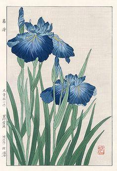 """Blue Iris"", Yuichi Osuga (b.1939) - 1954. [Source: Panteek]"