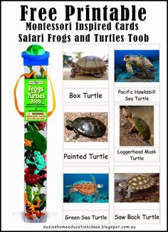 10  ideas for learning about Turtles