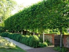 These stunning plants work hard to create outdoor privacy. These outdoor privacy plants are easy to manage, and a great addition to your yard. Try these plants for outdoor privacy! Privacy Trees, Privacy Plants, Privacy Landscaping, Outdoor Privacy, Backyard Privacy, Outdoor Landscaping, Outdoor Gardens, Landscaping Ideas, Formal Gardens