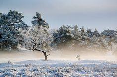 Winter in Drenthe (RTV Drenthe)