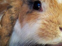 Kaninchenfan Lucky - Mein Kaninchenloch: kurze Vorstellung meiner Kaninchen - Who finds the mistake?!  Heute wollte ich noch einmal meine kleinen anhand Ihrer hübschen Gesichter vorstellen, da ich ab und an immer noch gefragt werden, wie Sie den heißen und wer, wer ist?! Viel Spaß beim ansehen der Bilder (^_^)  #animal#animals #bunny  #cat  #cats  #hase  #haustier #haustiere  #kaninchen  #karnickel  #katze  #katzen  #katzinchen  #mieze  #pet  #pets  #usagi  #zwergkaninchen