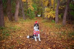 Olive the Border Collie is looking good on Pack. Dog Halloween Costumes, Happy Halloween, Border Collie Humor, Wheres Waldo, Dog Dresses, Dog Photos, Best Dogs, Boston Terrier, Puppies