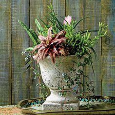 Indoor Container Gardening