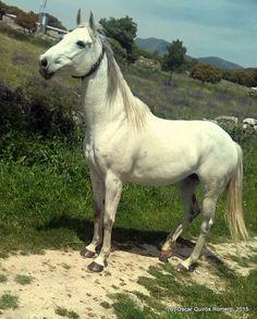 Año 2015: Se ha escapado un bello ejemplar de caballo asustado de una de las fincas cercanas