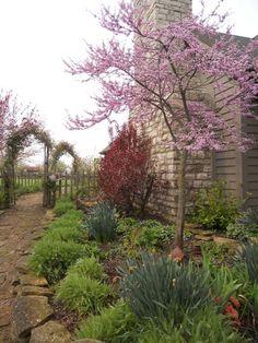 I love the redbud tree blooming. Raised Bed Garden Design, Rose Garden Design, Small Garden Design, Backyard Garden Landscape, House Landscape, Garden Landscaping, Garden Oasis, Flowering Trees, Redbud Trees