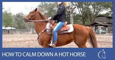 Here's a short blog post that will show you how to calm down a hot horse.